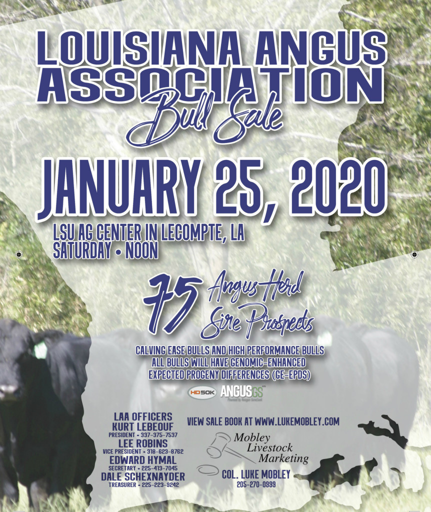 Louisiana Angus Bull Sale 2020a