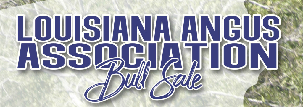 Louisiana Angus Bull Sale 2020a